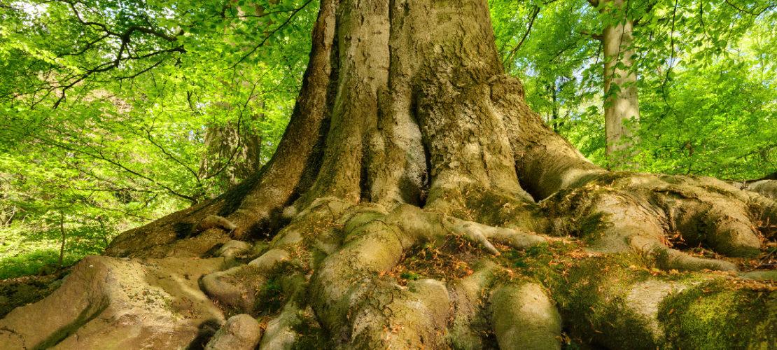 Perchè serve un Recovery Plan anche per le foreste del mondo